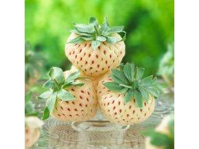 300 Ananasove jahody